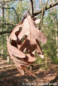 4x6-Leaf #3-HPIM1673-upload